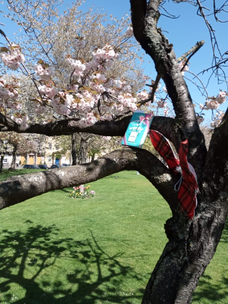In a tree in Edinburgh - Book Fairies hide copies of Everything is Beautiful by Eleanor Ray