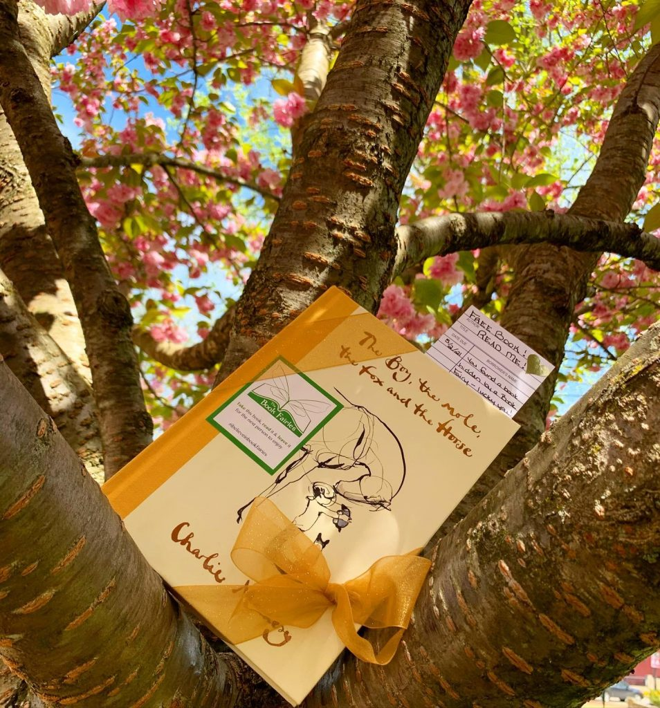 Up a tree - Book Fairies hide copies Charlie Mackesy The Boy The Mole The Fox and The Horse