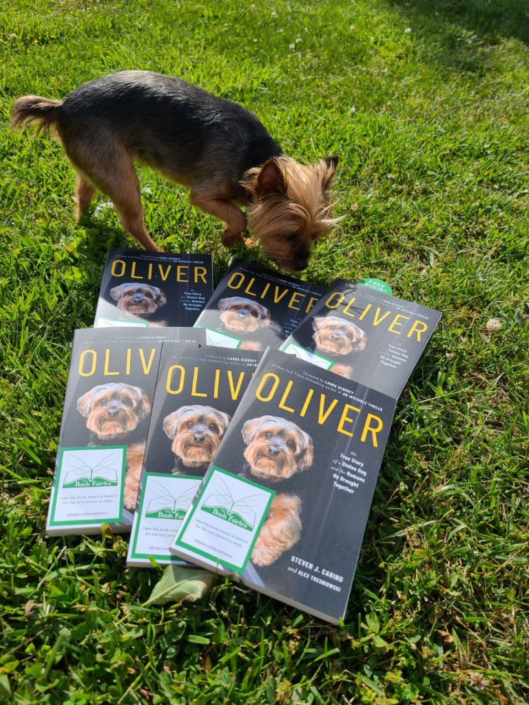 With a Yorkshire terrier - Book Fairies around the states hide copies of Oliver the dog