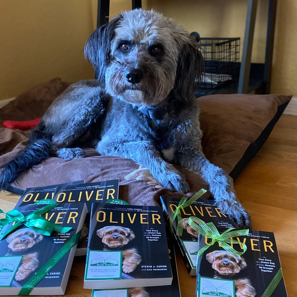 Book Fairies around the states hide copies of Oliver the dog - posing with a poodle