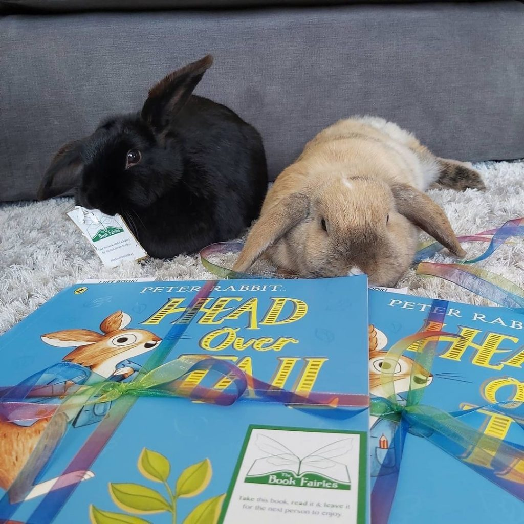 New Peter Rabbit adventure Head Over Tail shared by book fairies - rabbit preparations