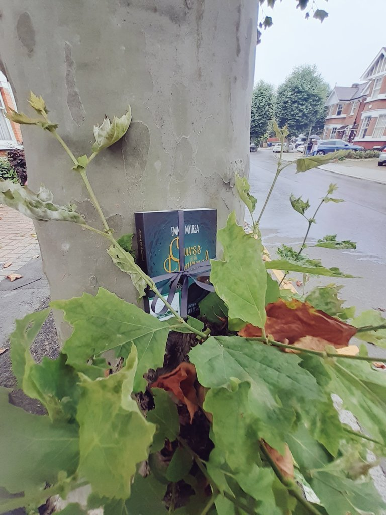 Curse of the Dearmad by debut author Emma Mylrea is shared by The Book Fairies in London